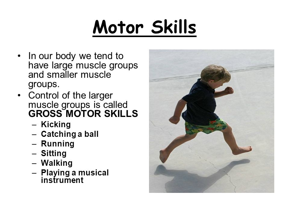 Motor Skills In our body we tend to have large muscle groups and smaller muscle groups.