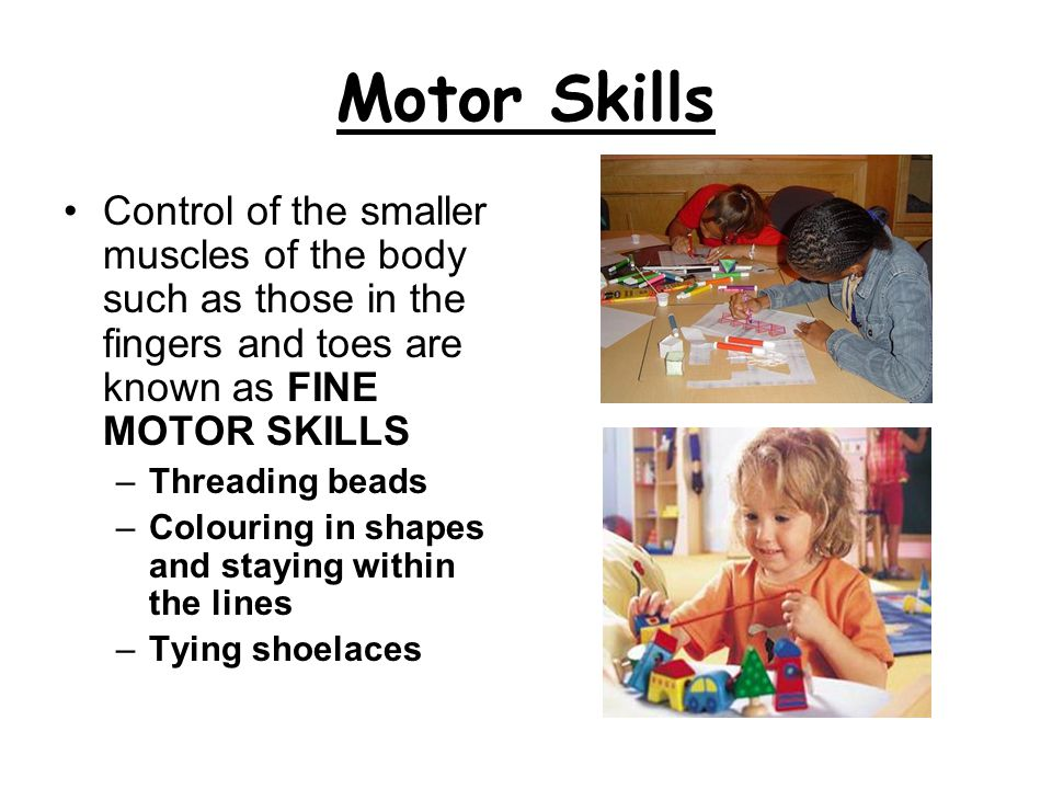 Motor Skills Control of the smaller muscles of the body such as those in the fingers and toes are known as FINE MOTOR SKILLS.