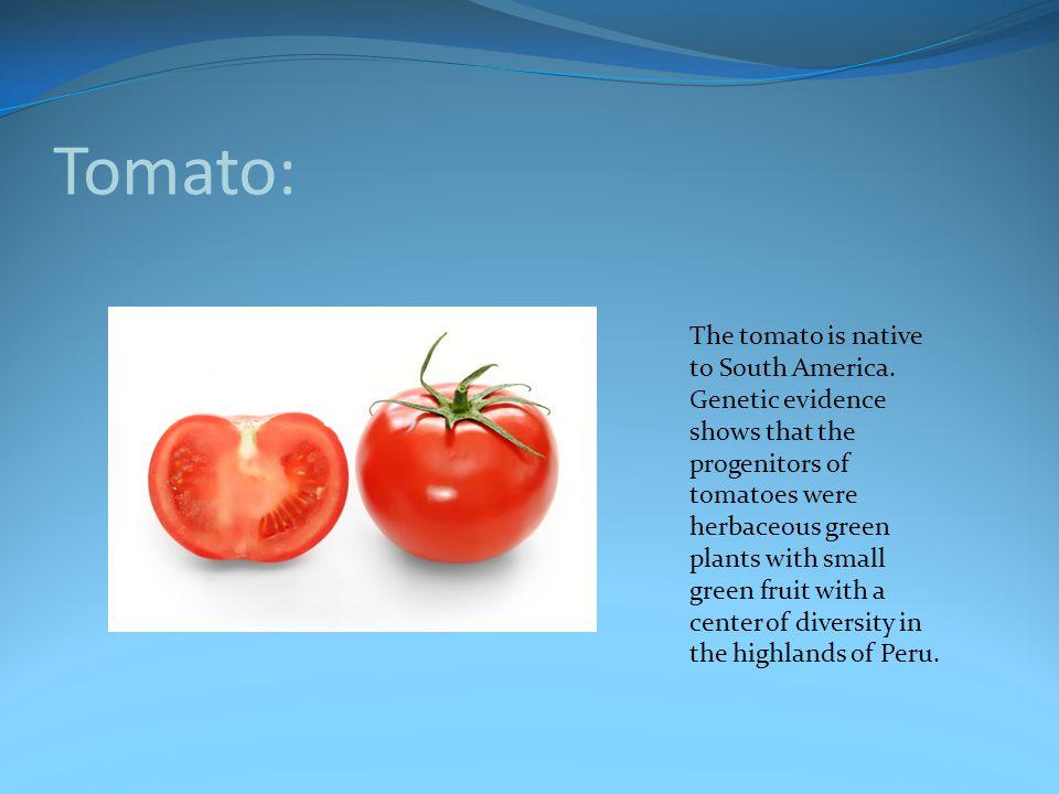 Tomato: