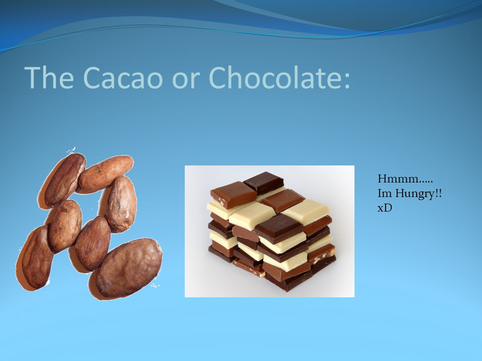 The Cacao or Chocolate: