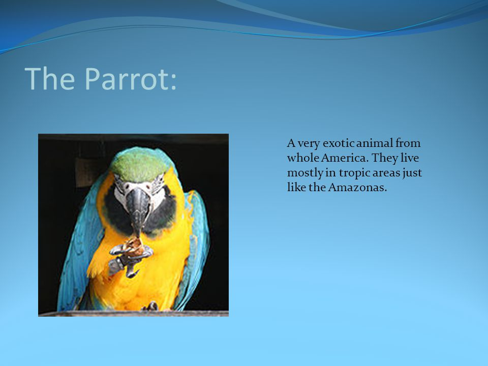 The Parrot: A very exotic animal from whole America.