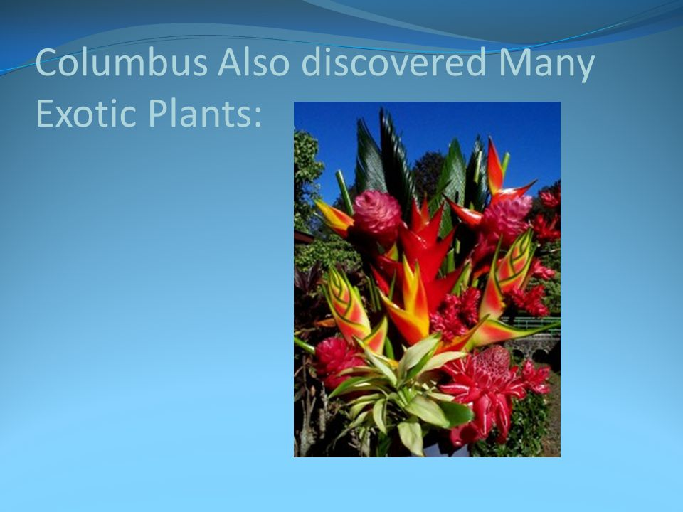 Columbus Also discovered Many Exotic Plants: