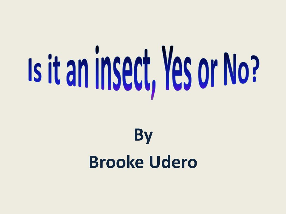 Is it an insect, Yes or No By Brooke Udero