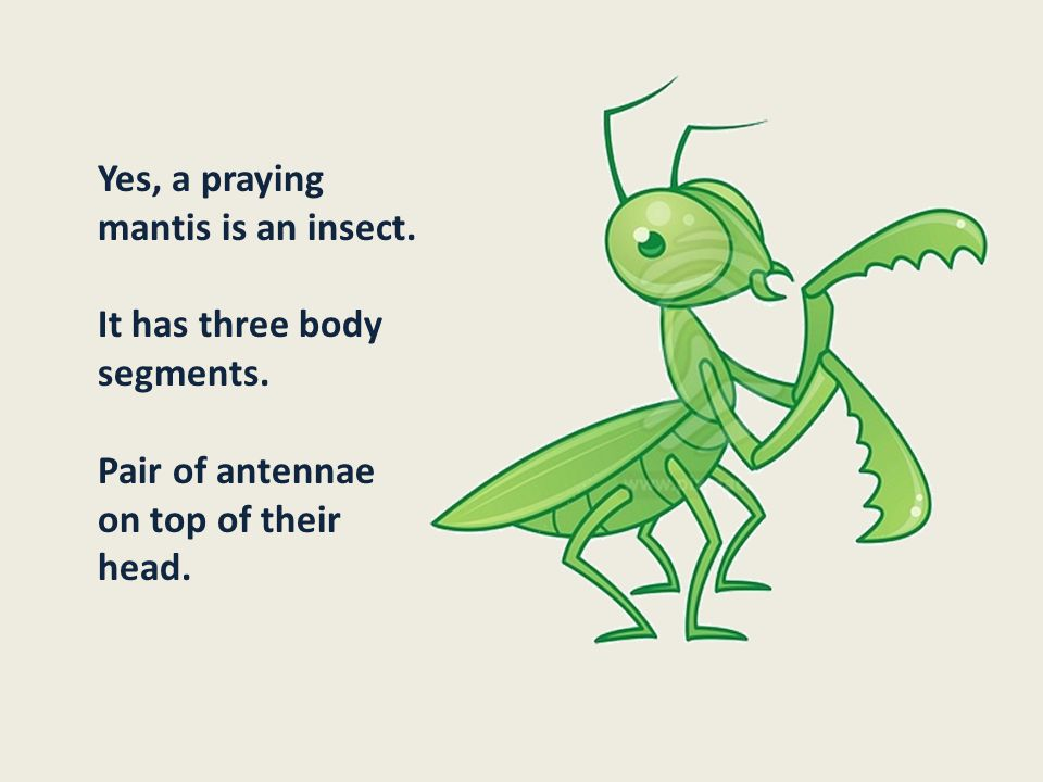 Yes, a praying mantis is an insect.