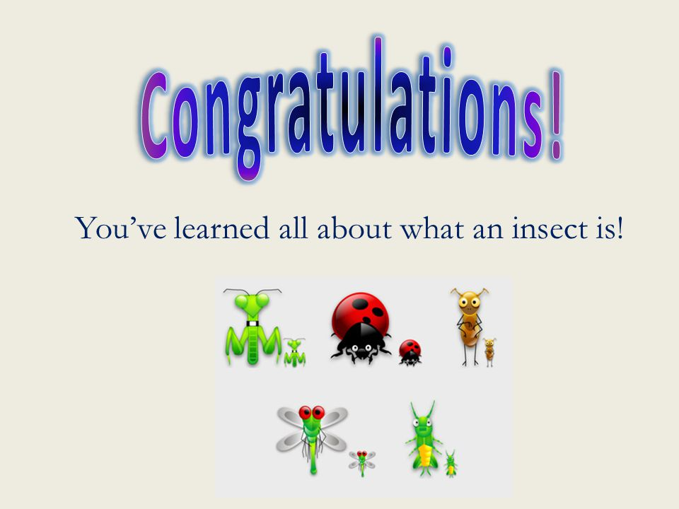 Congratulations! You've learned all about what an insect is!