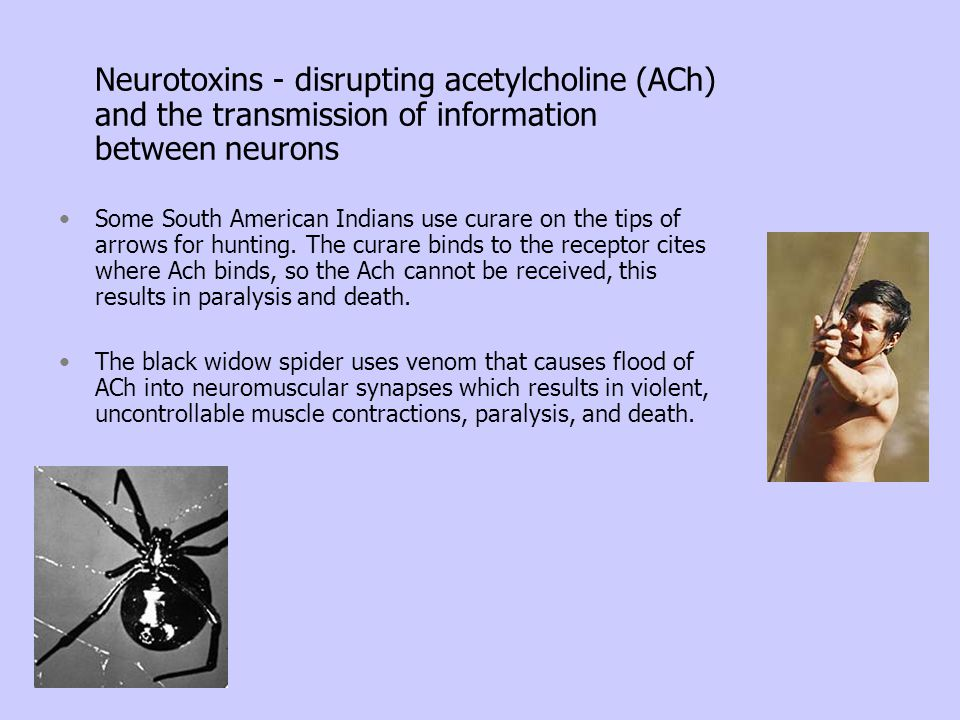 Neurotoxins - disrupting acetylcholine (ACh) and the transmission of information between neurons