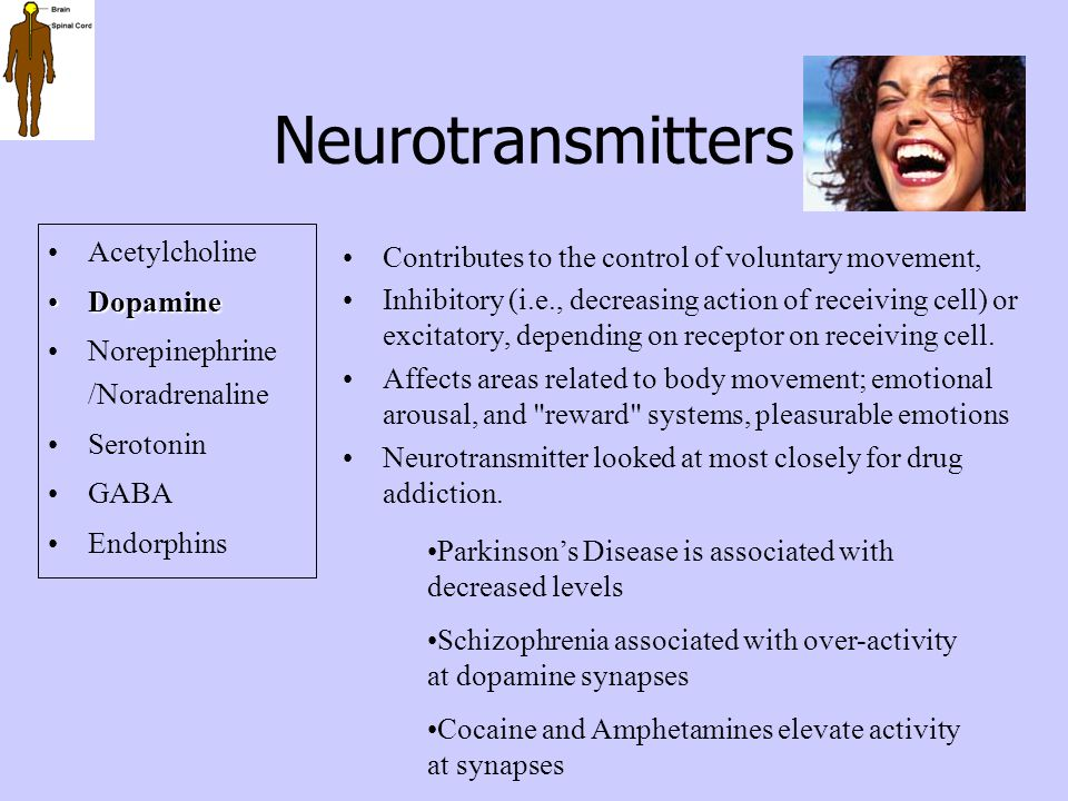 Neurotransmitters Acetylcholine