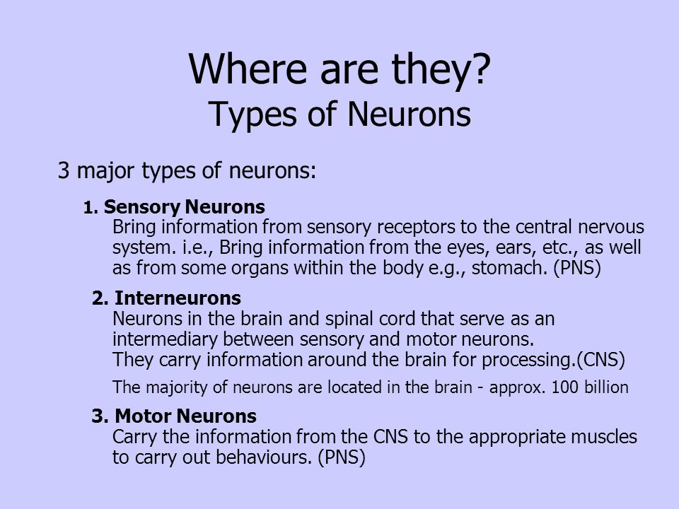 Where are they Types of Neurons
