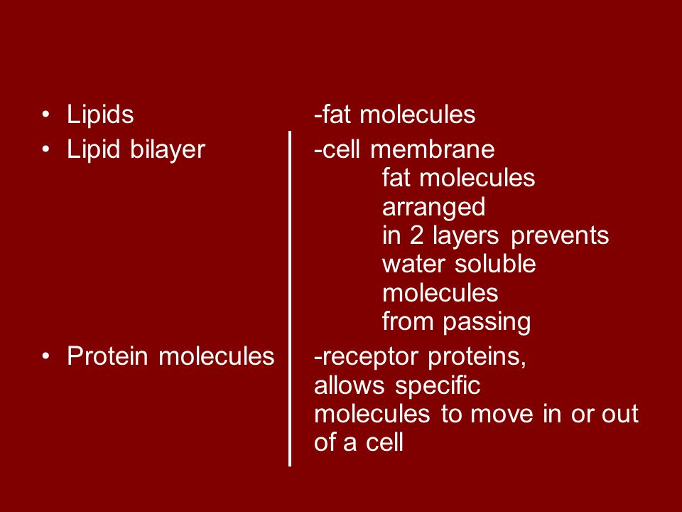 Lipids -fat molecules