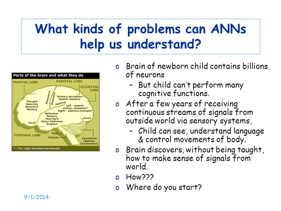 What kinds of problems can ANNs help us understand