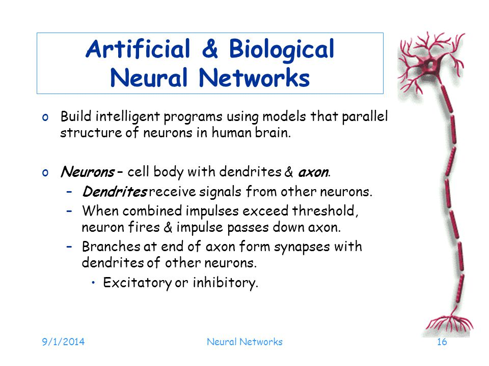 Artificial & Biological Neural Networks