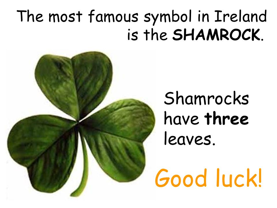 The most famous symbol in Ireland is the SHAMROCK.
