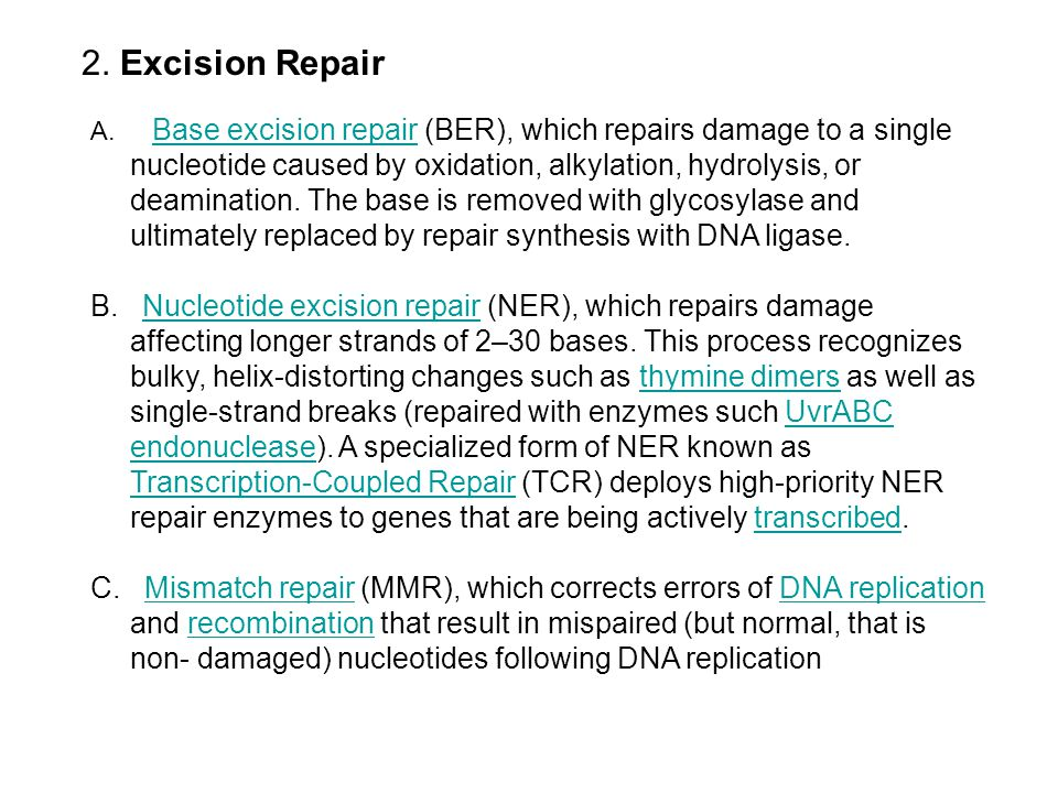2. Excision Repair