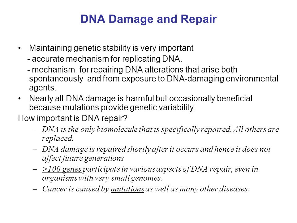 DNA Damage and Repair Maintaining genetic stability is very important