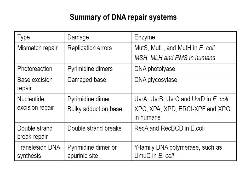 Summary of DNA repair systems