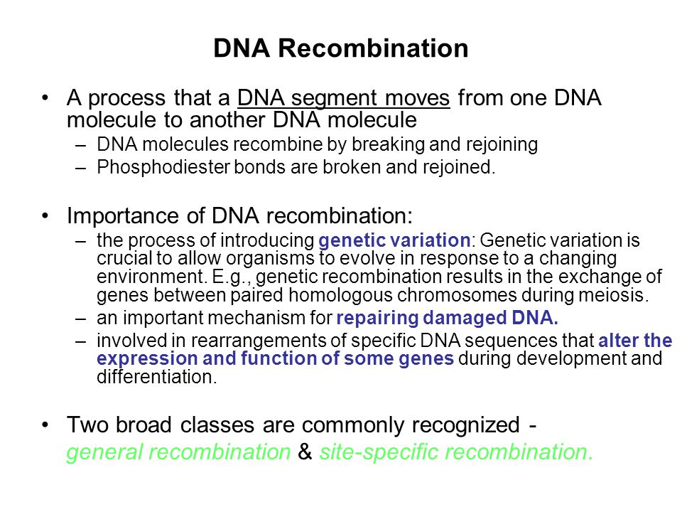 DNA Recombination A process that a DNA segment moves from one DNA molecule to another DNA molecule.