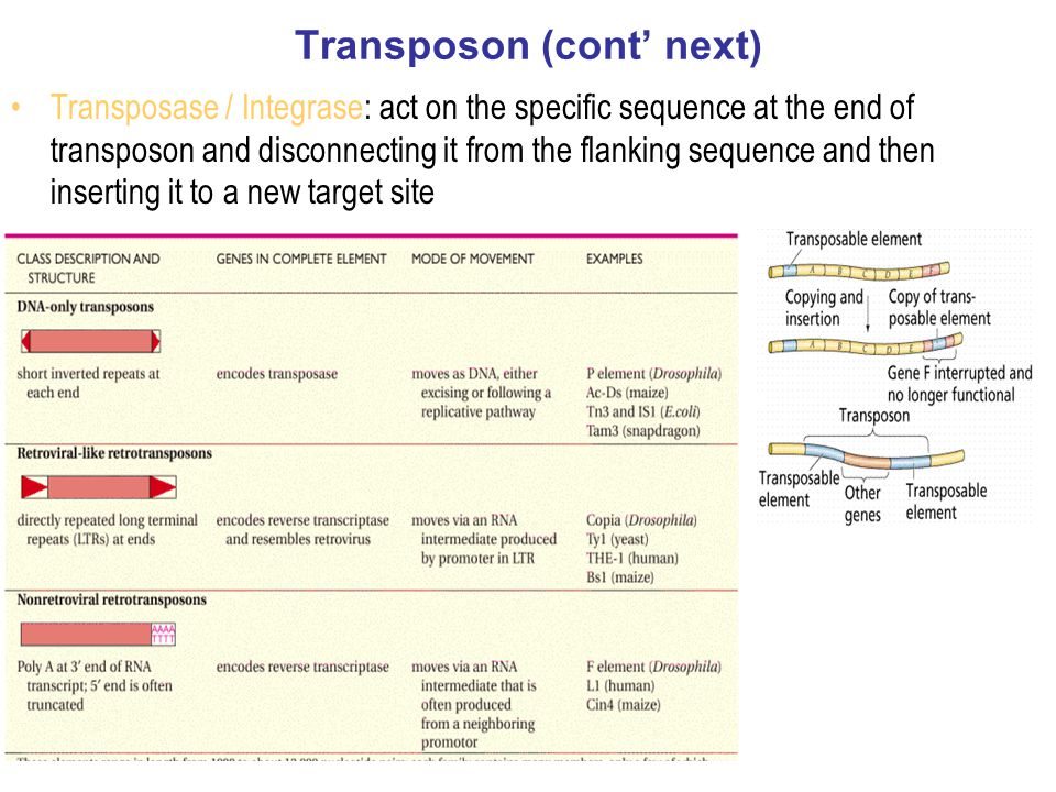 Transposon (cont' next)
