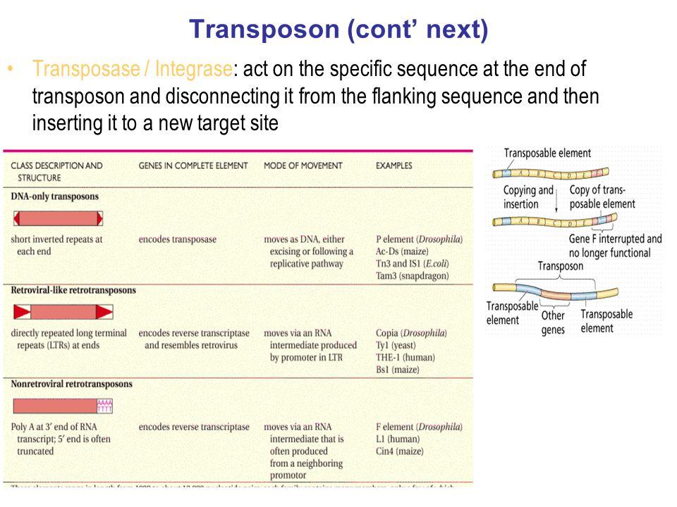 Transposon (cont' next)