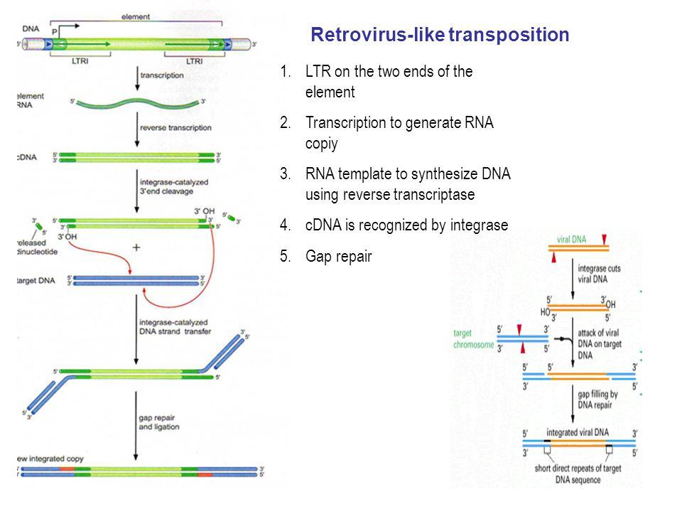 Retrovirus-like transposition