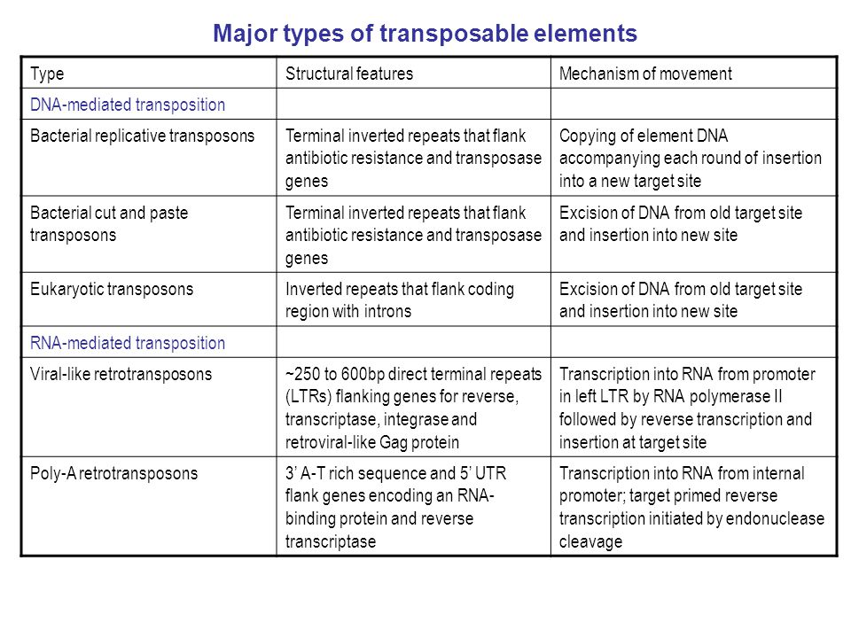 Major types of transposable elements