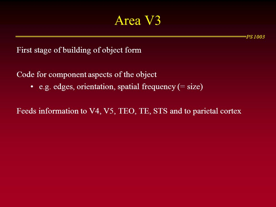 Area V3 First stage of building of object form