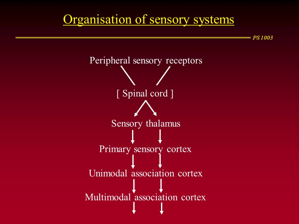 Organisation of sensory systems
