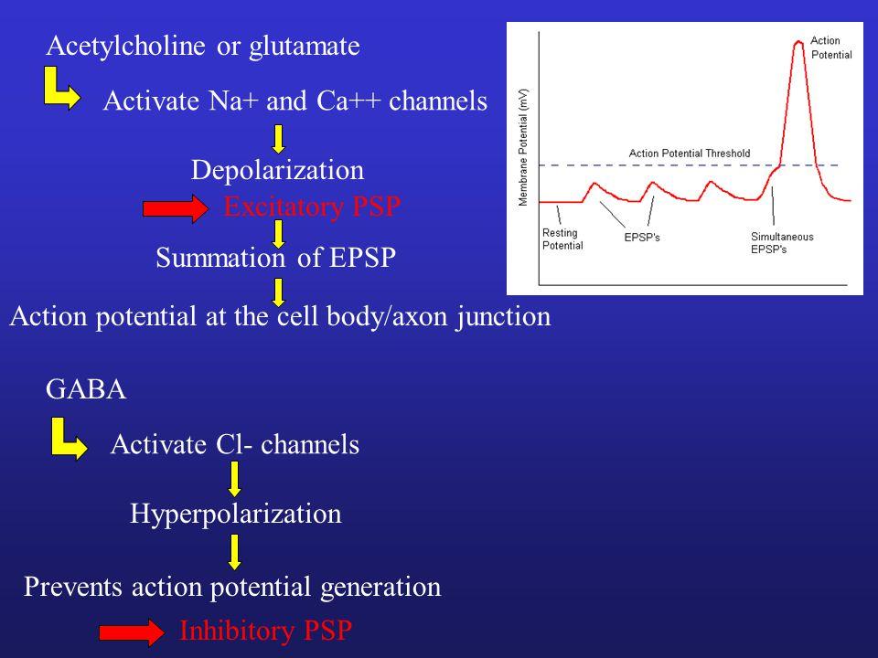 Acetylcholine or glutamate