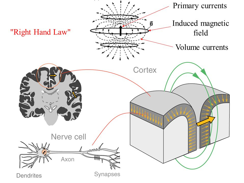 Primary currents Induced magnetic field Right Hand Law Volume currents