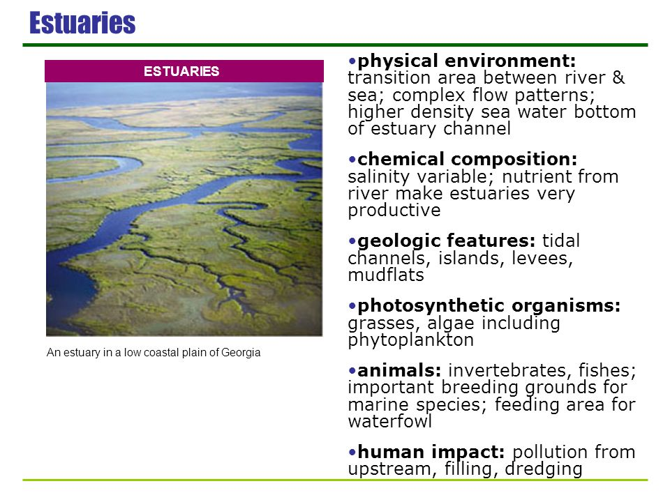 Estuaries physical environment: transition area between river & sea; complex flow patterns; higher density sea water bottom of estuary channel.
