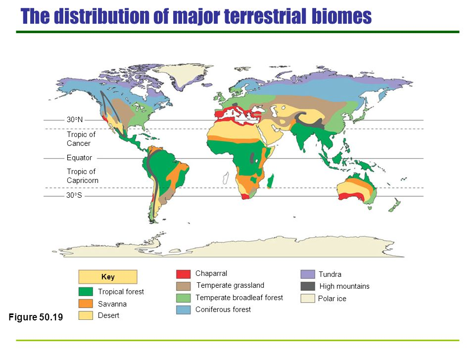 The distribution of major terrestrial biomes