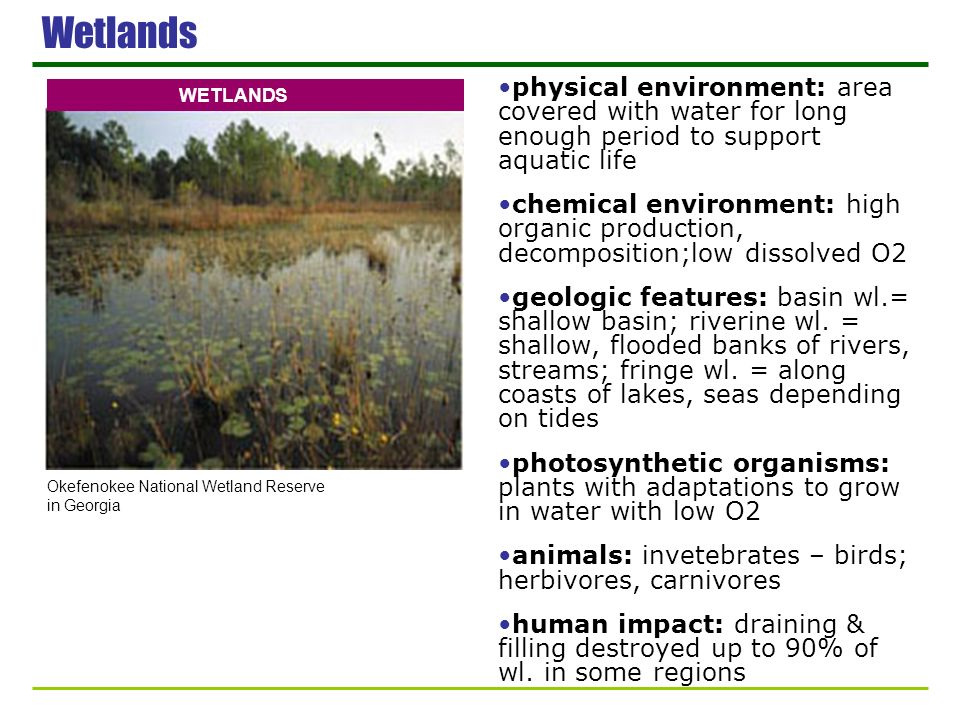 Wetlands physical environment: area covered with water for long enough period to support aquatic life.