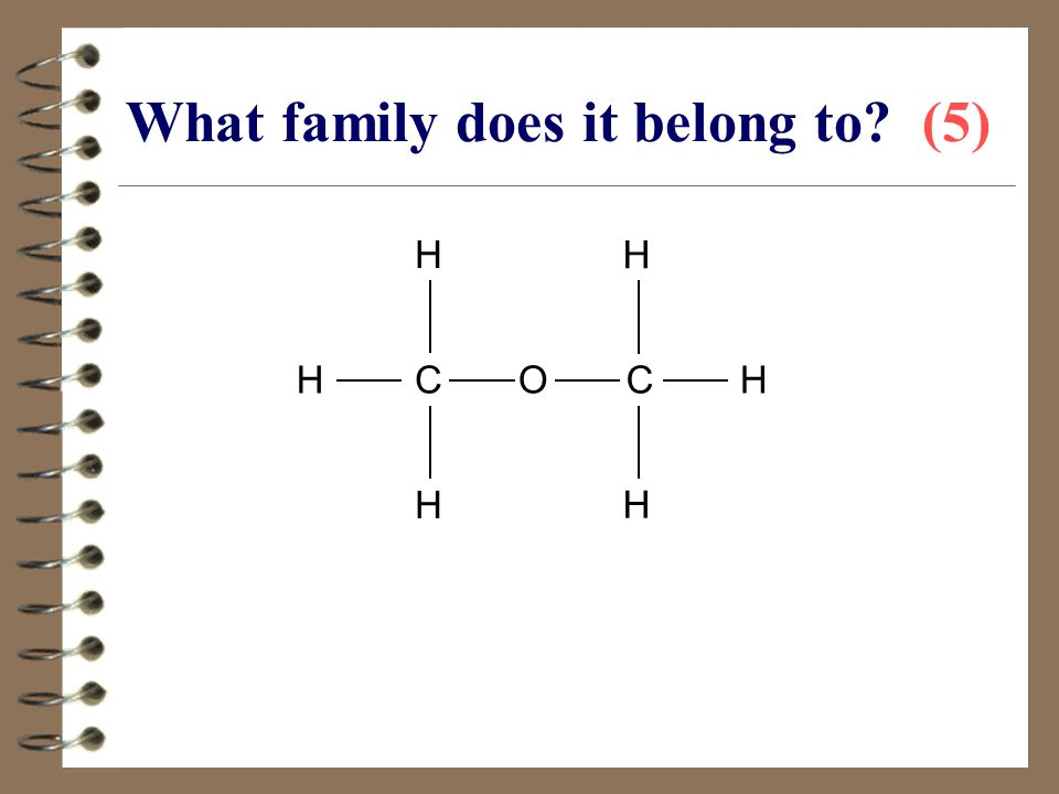 What family does it belong to (5)