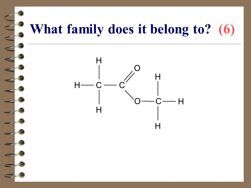 What family does it belong to (6)