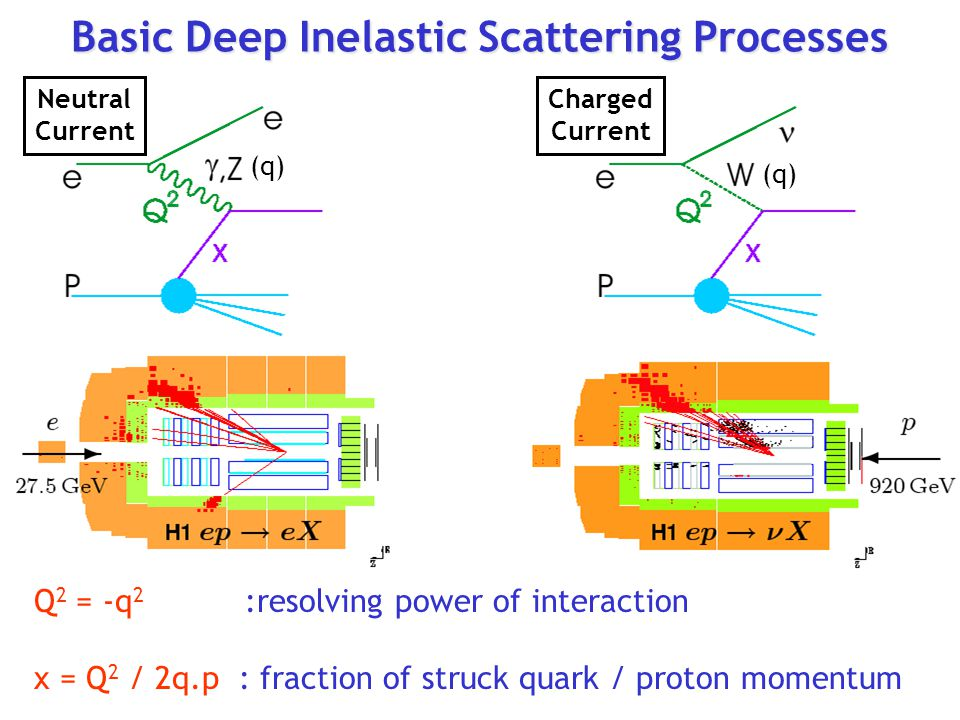Basic Deep Inelastic Scattering Processes