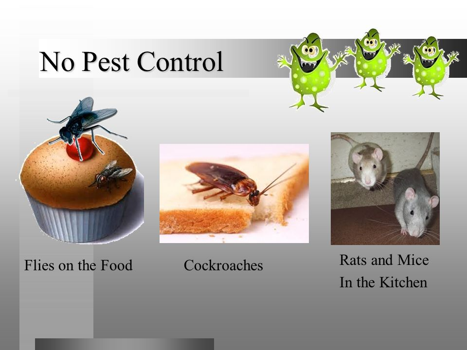 No Pest Control Flies on the Food Cockroaches Rats and Mice