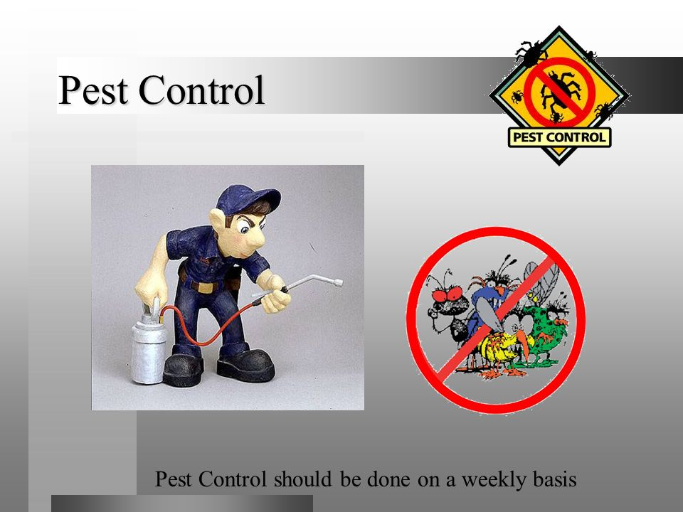 Pest Control Pest Control should be done on a weekly basis