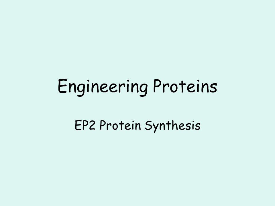Engineering Proteins EP2 Protein Synthesis