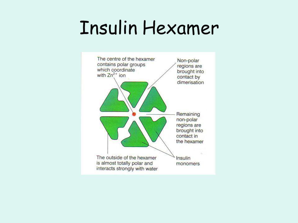 Insulin Hexamer