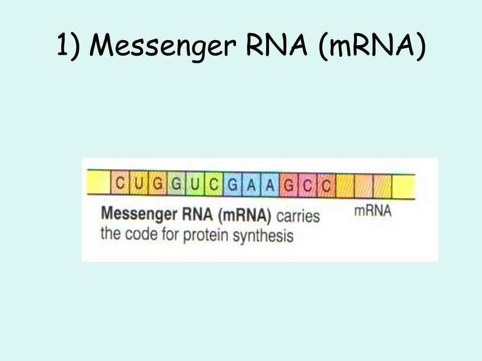 1) Messenger RNA (mRNA)