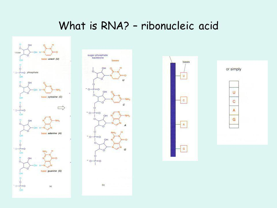 What is RNA – ribonucleic acid