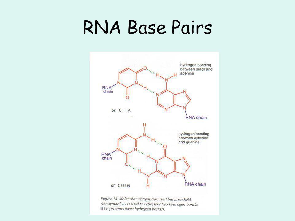 RNA Base Pairs