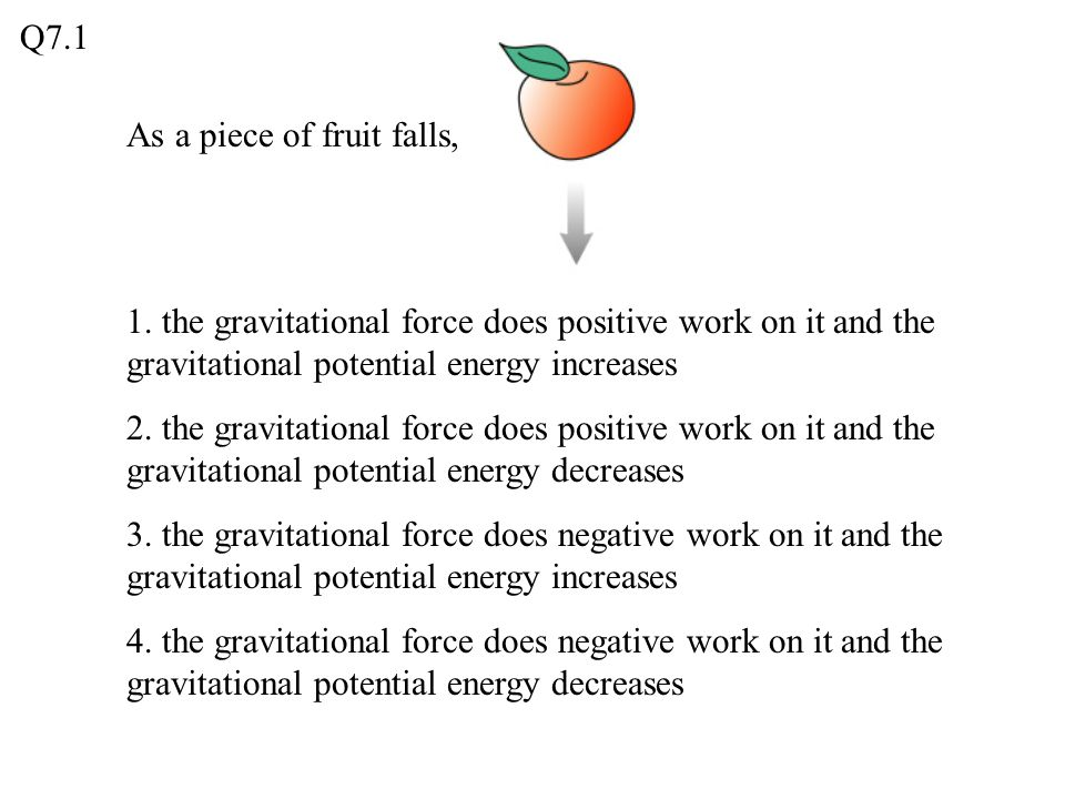 Q7.1 As a piece of fruit falls, 1. the gravitational force does positive work on it and the gravitational potential energy increases.