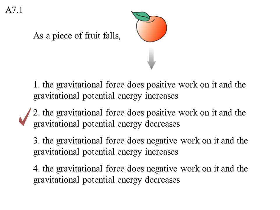 A7.1 As a piece of fruit falls, 1. the gravitational force does positive work on it and the gravitational potential energy increases.