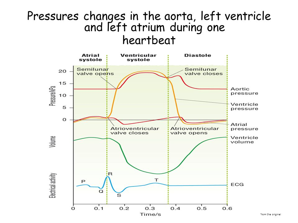 Pressures changes in the aorta, left ventricle and left atrium during one