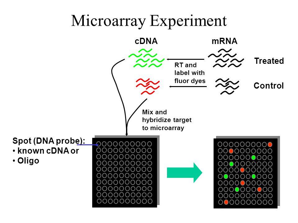 Microarray Experiment