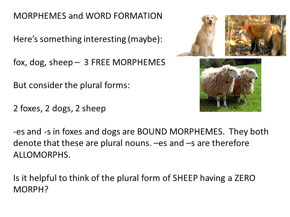 MORPHEMES and WORD FORMATION