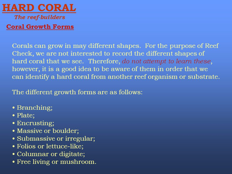 HARD CORAL Coral Growth Forms
