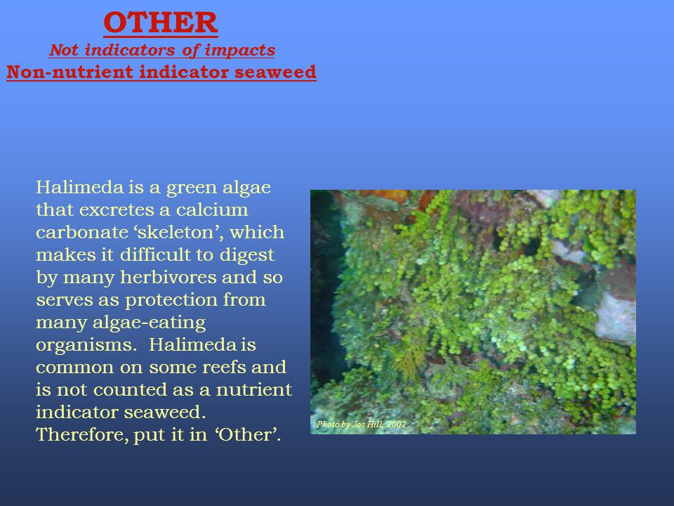 Not indicators of impacts Non-nutrient indicator seaweed
