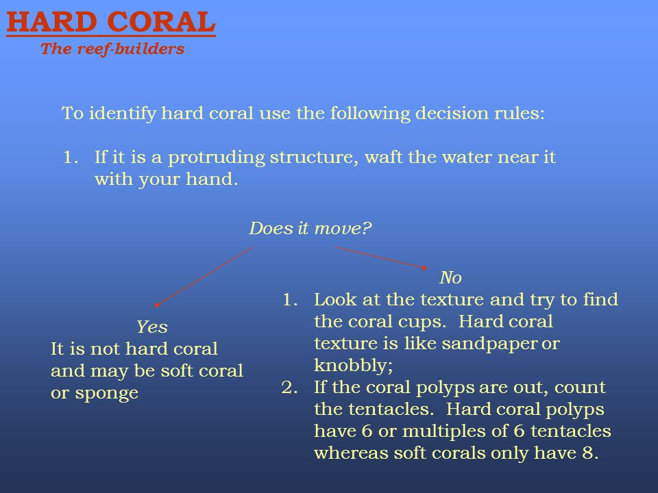 HARD CORAL To identify hard coral use the following decision rules: