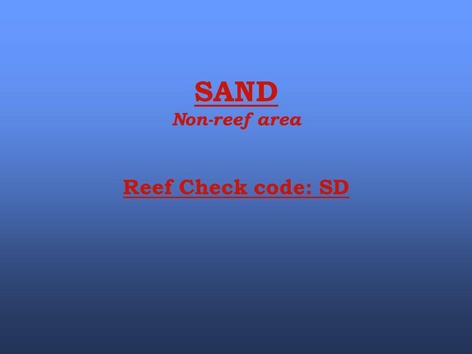 SAND Non-reef area Reef Check code: SD